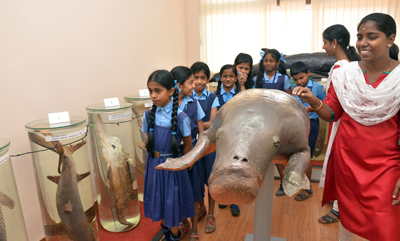 Photo-3-Museum--Sea-Cow.jpg